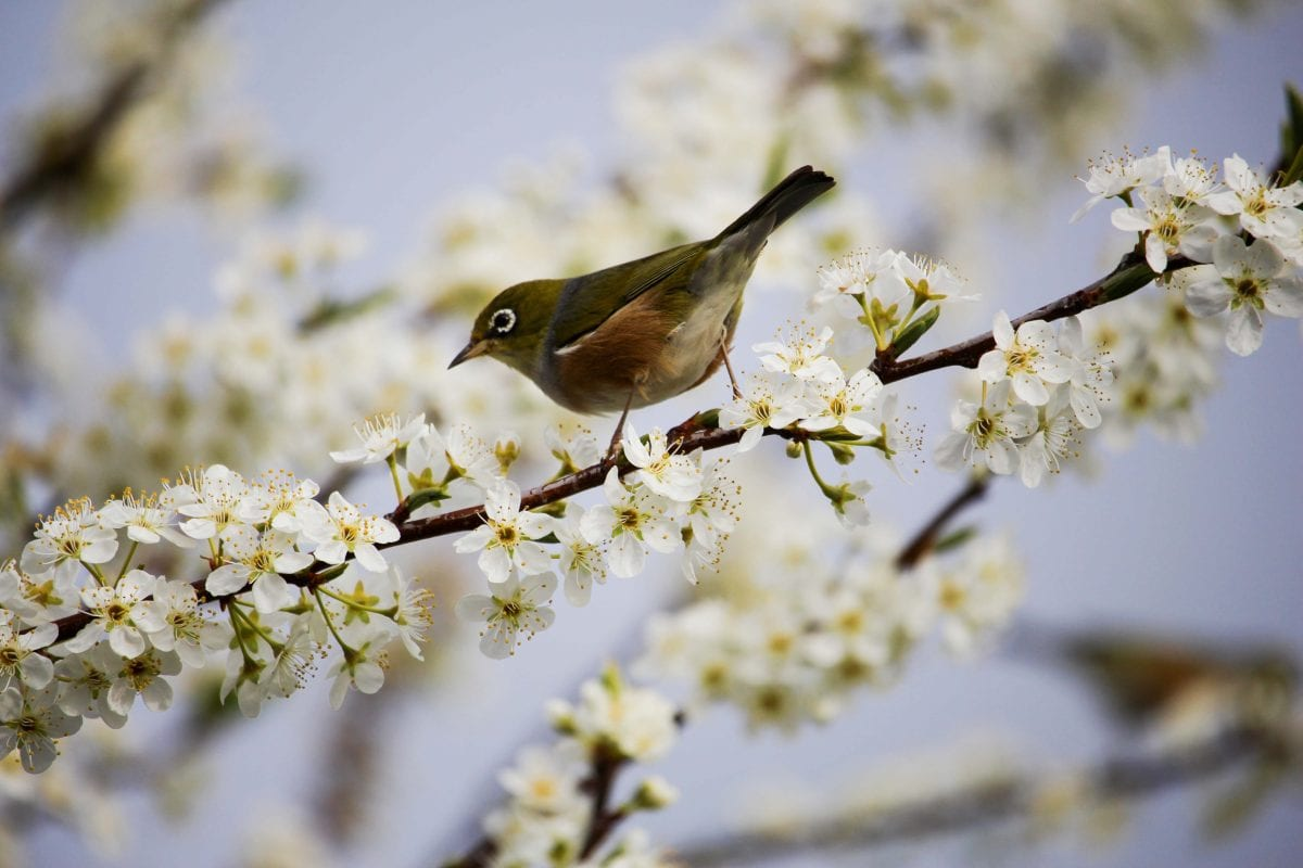 bird as a sign of spring